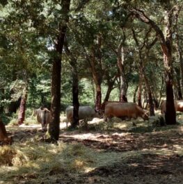 5th European Agroforestry Conference